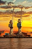 The Cranes At Sunset