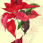Seamless pattern  with red poinsettia plant-03