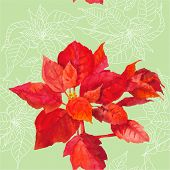 Seamless pattern  with poinsettia plant-05