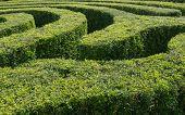 Tracks Of A Swirling Maze