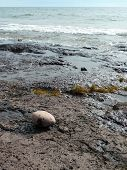 Solitary Round Rock On Rocky Beach