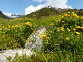 Water source in the mountain meadow