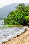 Mangrove Vegetation