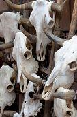 Background made of bull skulls