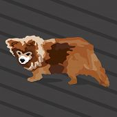 An image of a small brown dog.