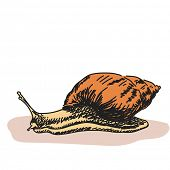 Color sketch of snail Vector illustration Hand drawn
