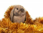 stock photo of rabbit year  - Dwarf rabbit in the Christmas tinsel - JPG