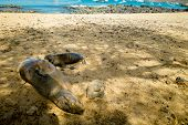 sea lion sunbathing in san cristobal galapagos islands