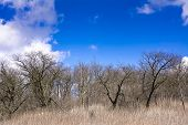 picture of forlorn  - Early spring in an old orchard on the hill - JPG