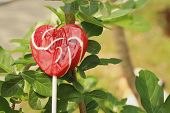 picture of valentine candy  - Candy valentines hearts on a green tree. ** Note: Soft Focus at 100%, best at smaller sizes - JPG