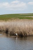 image of marshes  - A white bird in a marsh with a blue sky and clouds - JPG