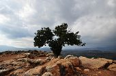 foto of lonely  - Lonely tree in the top of a mountain - JPG