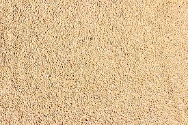 picture of urad  - Vigna mungo or urad dal kept under sunlight for drying - JPG