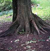 Tree And Tree Roots