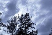 Storm Clouds Behind Tree