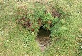 picture of rabbit hole  - a rabbit hole in a grass bank cornwall uk - JPG