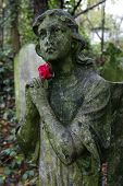 Stone Angel With Rose