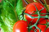 Perfect Fresh Tomatoes