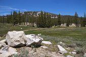Soda Springs Trail, Yosemite