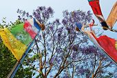Colored Prayerful Flags In Front Of Blue Sky And Tree Branches, Pokhara, Nepal