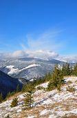 Winter hillside.