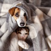 Dog and cat under a plaid. Pet warms under a blanket in cold autumn weather poster