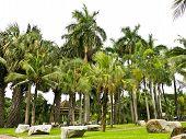 Lumpini Public Park In Bangkok
