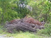 Stockpile Of Felled Trees And Limbs