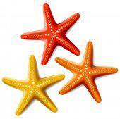 Tres estrellas de mar en blanco