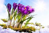 Frühling Florwer Hintergrund Kunst