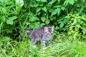 Little Grey Kitty Playing In The Garden poster