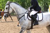 Beautiful Purebred Show Jumper Horse Canter On The Race Course After Race. Colorful Ribbons Rosette  poster