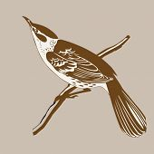 foto of crossbill  - thrush silhouette on brown  background - JPG