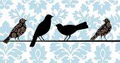 Aves de Damasco