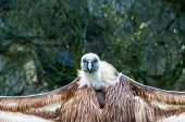 A Scavenger Bird Watching In A Wild Park poster