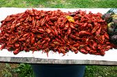 Crawfish2