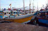 Fishing Port In Sri Lanka