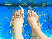 Fish spa pedicure. Rufa Garra fish spa pedicure massage treatment. Closeup of feet and fish in blue water. Female feet.