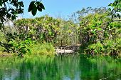 stock photo of cenote  - Crystal Cenote - JPG