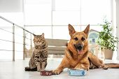 Cat And Dog Together With Feeding Bowls On Floor Indoors. Funny Friends poster