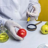 Food Safety Laboratory Procedure, Lab Assistant Makes A Shot In The Tomato. poster