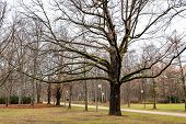 Branched Tree Near Footpath In Tiergarten Park Of Berlin Germany. Tranquil Landscape With Nobody In  poster