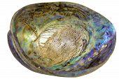 Paua Abalone Shell Inside Closeup