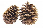 Two Pine Cones Closeup