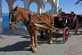 Horse drawn carriage, Balcony of Europe, Nerja, Spain.