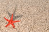 Starfish On Sand