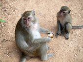 Small funny monkeys