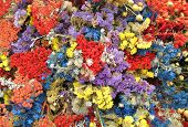 Colorful dried flowers