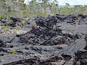 Lava flow and lava trees of 1974 on Big Island, Hawaii