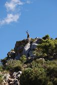 Goat on mountain near Marbella, Andalusia.
